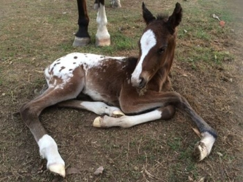 Filly by Macs Jack Flash